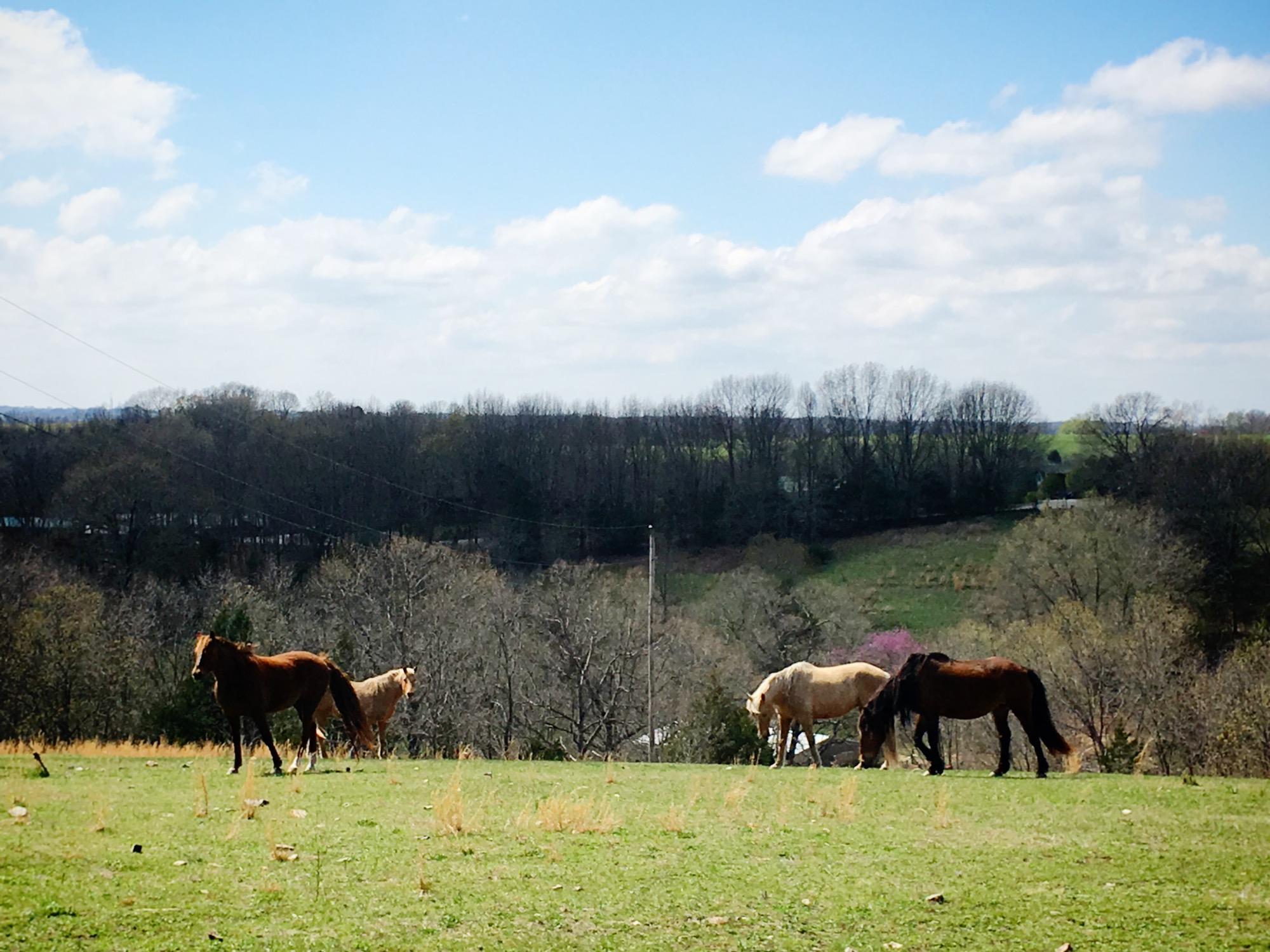 Horses on a country drive