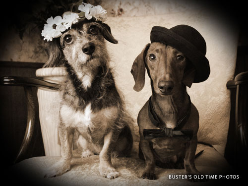 Two small dogs wearing costumes getting a vintage style photo taken at a store in Branson.