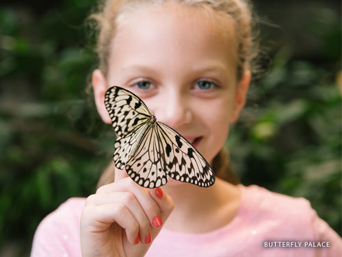 Young girl holding a large, live butterfly at an animal encounter attraction in Branson.