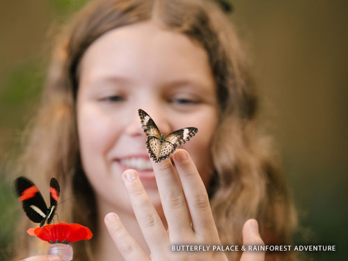 Young girl holding two live butterflies at a indoor rain forest attraction in Branson.