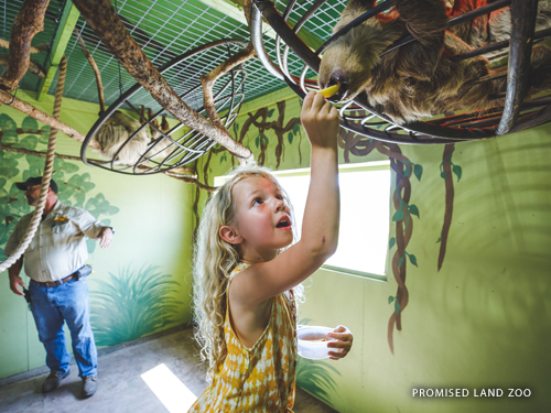 Young girl feeding a sloth at a zoo in Branson.