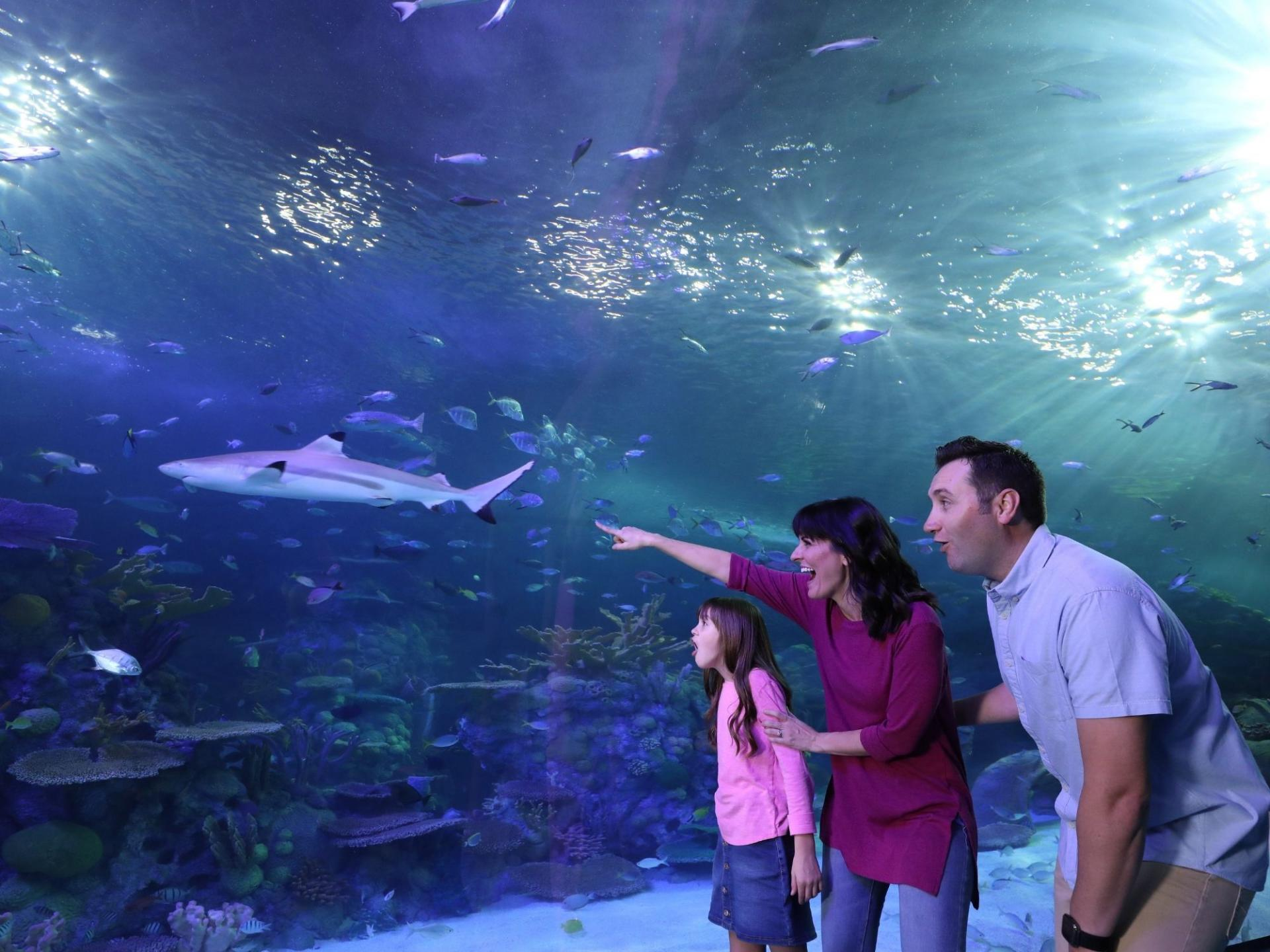 family enjoys the branson aqaurium at the boardwalk pointing at sharks