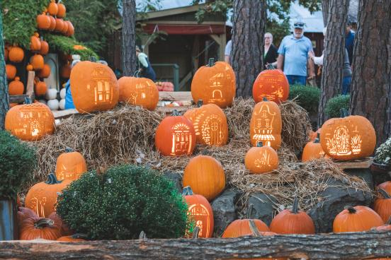 Pumpkins in the City