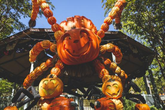 Giant spider made from hand-carved pumpkins at a theme park's fall festival in Branson.