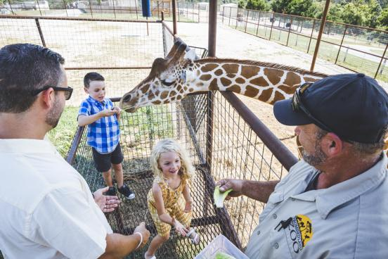 Family of four hand-feeding a giraffe at an outdoor zoo in Branson.